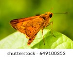 a butterfly standing on the... | Shutterstock . vector #649100353