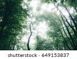 natural green forest background   Shutterstock . vector #649153837
