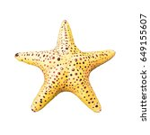 colorful alive starfish  ... | Shutterstock . vector #649155607