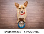 hungry  chihuahua dog behind... | Shutterstock . vector #649298983