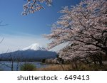 mount fuji and cherry blossoms | Shutterstock . vector #649413