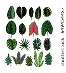 tropical leaves collection.... | Shutterstock .eps vector #649454437