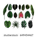 tropical leaves collection.... | Shutterstock .eps vector #649454467