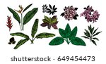 tropical leaves collection.... | Shutterstock .eps vector #649454473