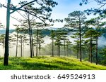beautiful green pine trees on... | Shutterstock . vector #649524913