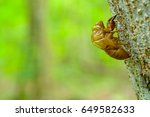 Small photo of Cicada shell adjoin tree and copy space
