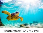 endangered hawaiian green sea... | Shutterstock . vector #649719193