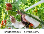 young female greenhouse... | Shutterstock . vector #649866397