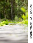 forest pathway in summer light  ... | Shutterstock . vector #650120023
