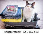 Stock photo cat sitting in the suitcase or bag and waiting for a trip travel with pets concept 650167513