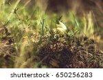 nature  29 | Shutterstock . vector #650256283