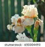 White Iris Flowers Macro On...