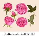 set of pink rose | Shutterstock .eps vector #650358103