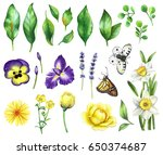 watercolor floral set with... | Shutterstock . vector #650374687