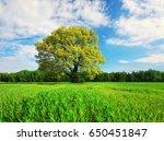green tree on meadow on blue...   Shutterstock . vector #650451847