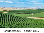 california vineyards  rolling... | Shutterstock . vector #650541817