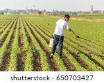 Young Farmer Spraying Soybean...