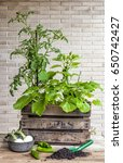 A Small Urban Vegetable Garden...