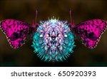Symmetrical Butterflies On...