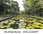 giant lily pond at mauritius... | Shutterstock . vector #651123697