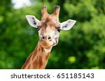 Close up of a giraffe in front...