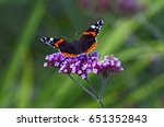 Red Admiral Butterfly On A...