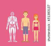 constitution of human body.... | Shutterstock . vector #651383137