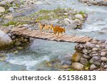 Two Dogs Crossing A Bridge Ove...