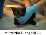 sick kitten at the vet | Shutterstock . vector #651748333