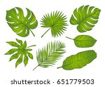 set of green tropical palm... | Shutterstock .eps vector #651779503