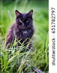 Old Black Cat In The Grass