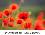 Beautiful Red Poppies On A...