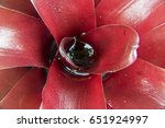 Small photo of Water accumulated on a red plant