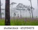 Sweet Purple Flowers In Pine...