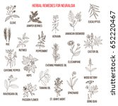 best herbal remedies for... | Shutterstock .eps vector #652220467