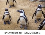 african penguins in the tbilisi ... | Shutterstock . vector #652298353