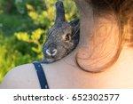 Stock photo a girl is holding a small gray rabbit gray rabbit chinchilla rabbit 652302577