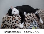 the black and white cat is... | Shutterstock . vector #652472773