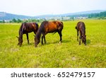 horses grazing in field... | Shutterstock . vector #652479157