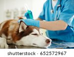 sick dog during injection... | Shutterstock . vector #652572967