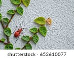 Small photo of Red insect and green grass adhere on white cement wall