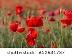 flowers red poppies blossom on... | Shutterstock . vector #652631737