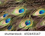 beautiful feathers of the...   Shutterstock . vector #652643167