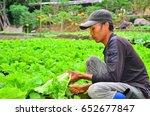 cameron highland  malaysia.... | Shutterstock . vector #652677847
