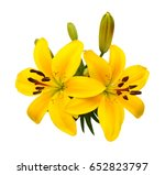 beautiful lily flowers isolate... | Shutterstock . vector #652823797