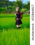Small photo of Portrait of beautiful young asian lady Akha tribe in vivid flower garden