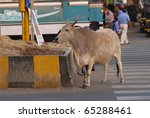a cow waiting to cross the road ... | Shutterstock . vector #65288461