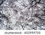 naked branches of trees against ... | Shutterstock . vector #652959733