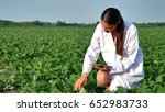 a plant specialist  checking... | Shutterstock . vector #652983733