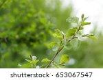 nature in summer. greenery....   Shutterstock . vector #653067547